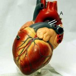 distilled water can effect cardiovascular health