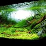 Reverse Osmosis Water Aquarium